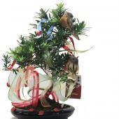Dilek Ağacı Bonsai