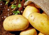 Patates , Bolu Patatesi 20 Kglık Çuval