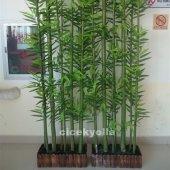 Yeşil Bambu Uygulaması