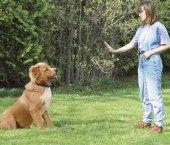 Köpek Eğitim Tasması Petainer Şarjlı Kumandalı 998DR-4