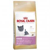Royal Canin Kitten British Shorthair Yavru Kedi...