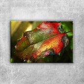 Yaprak Üzerinde Su Damlaları, Hd Renkler...