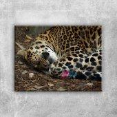 Uyuyan Kaplan Hayvanlar Kanvas Tablo Art Tablo