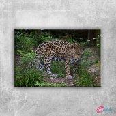 Kaplan 6 Hayvanlar Kanvas Tablo Art Tablo