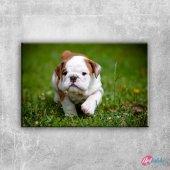 Bulldog Puppy Hayvanlar Kanvas Tablo Art Tablo