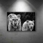Kaplan Vahşi Yaşam Siyah Beyaz 2 Dekoratif Canvas ...