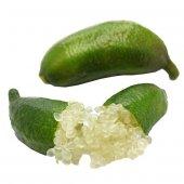 8 Yaş (Meyveli) Finger Lime Parmak Limon (Sınırlı Tok)