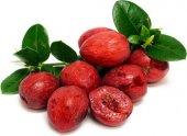 Natal Eriği (Carissa Macrocarpa) (Saksılı Meyve Verir Durumda)