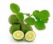 Kaffir Lime Limon Fidanı Nadir Çeşit 5 Yaşlı Tüplü