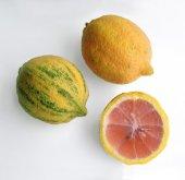 Pembe Alacalı Limon (Yeni Ürün Torbalı)