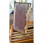 Saf Organik Çamlıhemşin Balı 100 Doğal 1 Kg