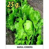 Marul Tohumu Iceberg 25g. (Takribi 17500 Tohum)