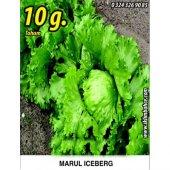 Marul Tohumu Iceberg 10g. (Takribi 5500 Tohum)