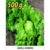 Marul Tohumu Iceberg 500 G.