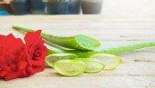 Aloe Vera Bitkisi Jel İçin Yaprak 750 Gr,tıbbi Aloe Vera,2,5 Yaşındaki Gelişmiş Bitkilerden