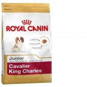 Cavalier King Charles Irk Bebek Köpek Maması...