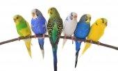 Ti Sert Elekli Kuş Yemlik Kanarya Muhabbet Kuşu Yemlik Şeffaf-2