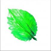 Yeşil Yaprak Kanvas Tablo