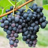 AGROEGE Sivi Aminoasit Bitki Direnç Sağlayıcı ( 1LT )-5