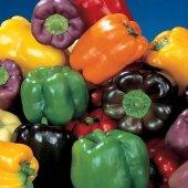 Renkli Dolmalık Biber Tohumu Karışımı