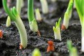 Biohumus Organik Bitki Besin Gübresi 50 Kg İKİLİ-3