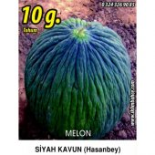 Kavun Tohumu Hasan Bey 1 10g (Takribi 140 Tohum)