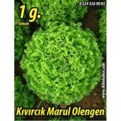 Marul Tohumu Olengen 1 gr (~ Takribi 550 Tohum)