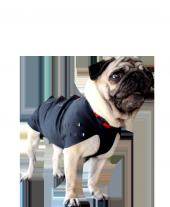 Win Pet Ameliyat Sonrası Köpek Elbisesi S 49*44 cm-4