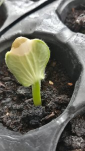 Biohumus Organik Gübre Bitki Besin Gübresi 1750 Ml ÖZEL PAKET-4