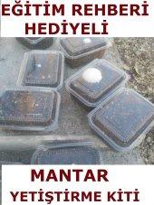 4 Adet Kültür Mantarı Tohumu Miseli Ekili...
