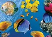 Ks Games Animal Planet 100 Parça Underwater Sualtı