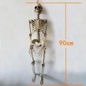Insan Vücudu İskelet Kemik Dekor 90 Cm