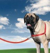 Easy Walk Harness Köpek Göğüs Tasması X Small...