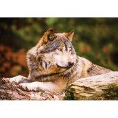 Ks Games Animal Planet 100 Parça Lonewolf