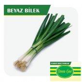 Fide Sepeti Yeşil Soğan (Beyaz Bilek) Tohumu...