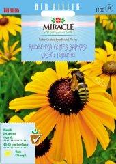 Miracle Hirto My Joy Rudbekya (Güneş Şapkası) Çiçeği Tohumu (900