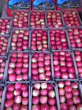 Amasya Elması (3kg) Amasya Posta Pazarı