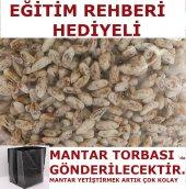 KÜLTÜR MANTARI TOHUMU MİSELİ + MANTAR TORBASI + EĞİTİM KILAVUZU
