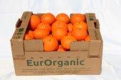 Sertifikalı Organik Mandalina 7kg Karton
