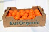 Sertifikalı Organik Mandalina 15kg Karton