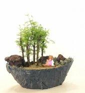 Larex Bonsai Ağacı
