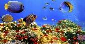 Plaj Havlusu Balık Desenli