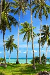 Plaj Havlusu Ağaç Desenli