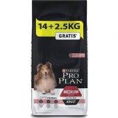 Proplan Köpek Maması Somonlu Yetişkin 14+2,5kg