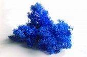 Terramoss Ren Geyiği Yosunu (Reindeer Moss) Mavi 1kg