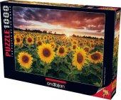 Günbatımında Ayçiçekleri 1000 Parça Puzzle