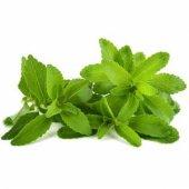 Stevia Doğal Şeker Otu Tohumu
