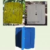 Bks Yellow Sarı Yapışkanlı Tuzak Trips Akdeniz Sineği ve Yaprak B-2