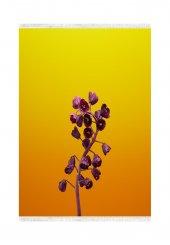 Belemir B024 Fritillaria Dekoratif Halı
