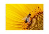 Belemir B072 Arılar Dekoratif Halı